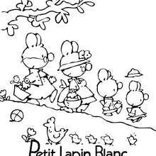 Colorie gratuitement PETIT LAPIN BLANC - Coloriage - Coloriage PETIT LAPIN BLANC