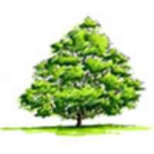 Conte : Le dernier rêve du chêne