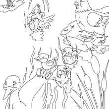 Coloriage conte le vilain petit canard - Coloriage - Coloriage de CONTES CELEBRES - Coloriages des contes d'Andersen