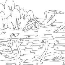 Coloriage gratuit le vilain petit canard - Coloriage - Coloriage de CONTES CELEBRES - Coloriages des contes d'Andersen