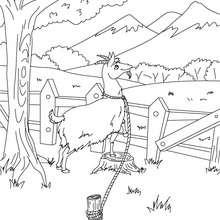 Coloriage La chèvre de Monsieur Seguin - Coloriage - Coloriage de CONTES CELEBRES - Contes de DAUDET à colorier