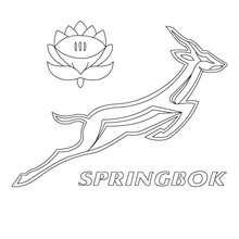 Blason des Spring Box d'Afrique du sud