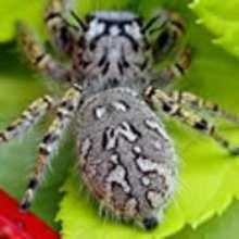 Actualité : L'exposition au fil des araignées