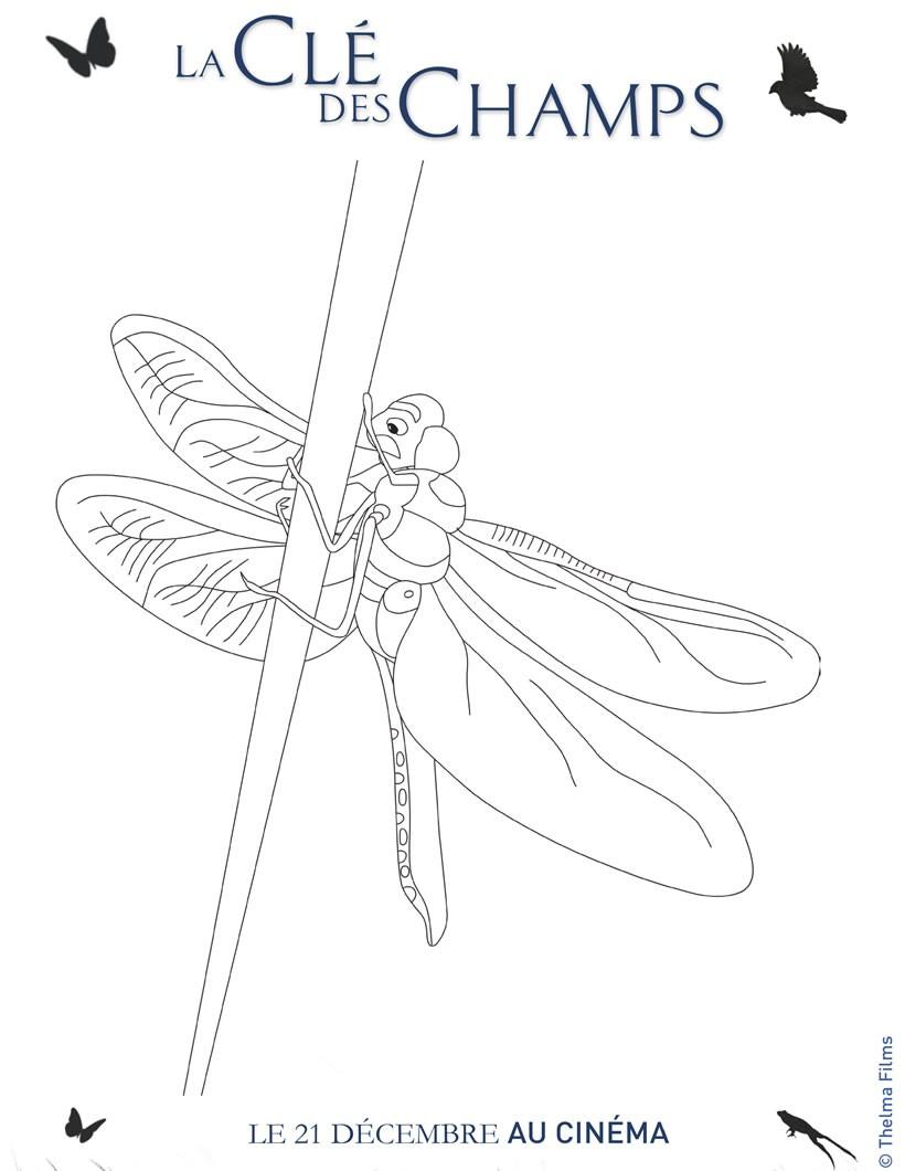 Coloriages coloriage libellule - Photo de libellule a imprimer ...