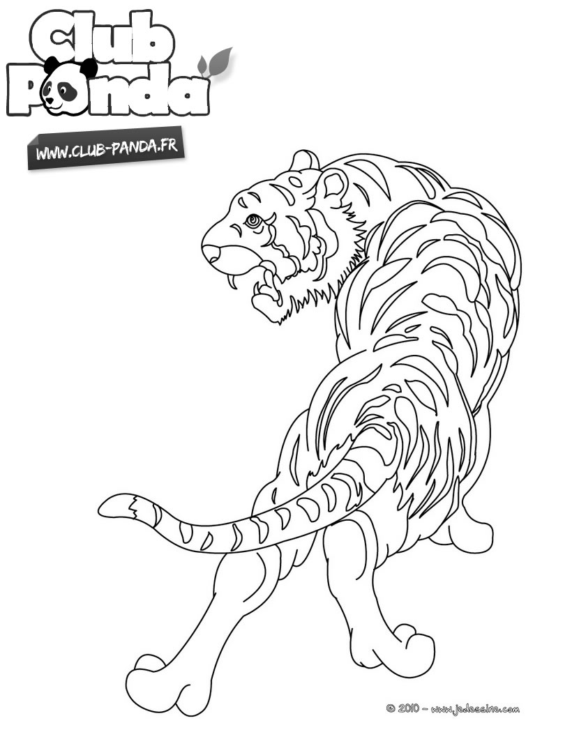 Coloriage Tigre  colorier Club Panda Imprimer