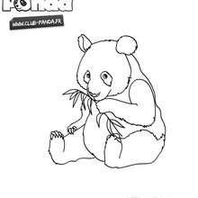 Panda à colorier - Club Panda - Coloriage - Coloriage ANIMAUX - Coloriage CLUB-PANDA