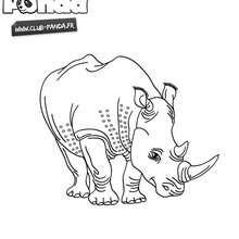 Rhinocéros à colorier - Club Panda - Coloriage - Coloriage ANIMAUX - Coloriage CLUB-PANDA