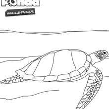 Coloriage : Tortue à colorier - Club Panda