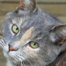 Dessin animé : Le chat