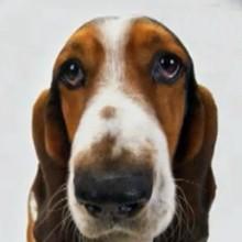 Le chien - Vidéos - Vidéos de DESSINS ANIMES - Vidéos LES AMIS DE SCOOBY