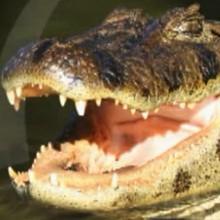 Le crocodile - Vidéos - Vidéos de DESSINS ANIMES - Vidéos LES AMIS DE SCOOBY