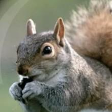 L'écureuil - Vidéos - Vidéos de DESSINS ANIMES - Vidéos LES AMIS DE SCOOBY
