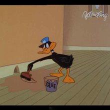 Dessin animé : Daffy Duck : Vidéo 10