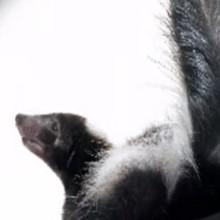 La mouffette - Vidéos - Vidéos de DESSINS ANIMES - Vidéos LES AMIS DE SCOOBY