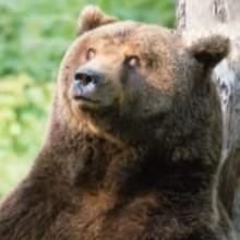 L'ours - Vidéos - Vidéos de DESSINS ANIMES - Vidéos LES AMIS DE SCOOBY