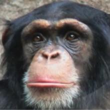 Le singe - Vidéos - Vidéos de DESSINS ANIMES - Vidéos LES AMIS DE SCOOBY