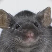 La souris - Vidéos - Vidéos de DESSINS ANIMES - Vidéos LES AMIS DE SCOOBY