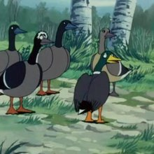 Episode 18 : Le grand lac aux oiseaux - Vidéos - Vidéos NILS HOLGERSSON au pays des oies sauvages