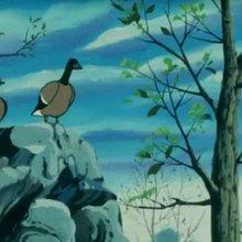 Episode 06 : Le défi des oies sauvages - Vidéos - Vidéos NILS HOLGERSSON au pays des oies sauvages