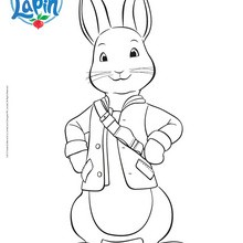 Coloriage : PIERRE LAPIN à colorier