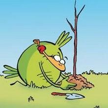 Leçon de jardinage - Lecture - BD pour enfant - Le Piou, l'oiseau le plus idiot de tous - Le Piou : IDIOT D'OISEAU