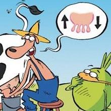 Comment traire une vache - Lecture - BD pour enfant - Le Piou, l'oiseau le plus idiot de tous - Le Piou : IDIOT D'OISEAU