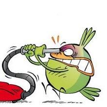 Les feuilles mortes (2eme partie) - Lecture - BD pour enfant - Le Piou, l'oiseau le plus idiot de tous - Le Piou : IDIOT D'OISEAU