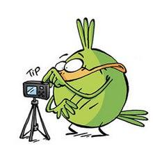 Le tour du monde en 2 minutes - Lecture - BD pour enfant - Le Piou, l'oiseau le plus idiot de tous - Le Piou : WORLD TOUR