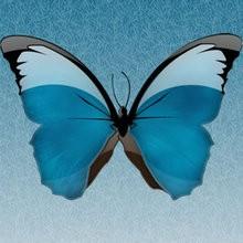 Conte : Le papillon
