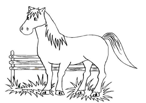 Coloriage : Cheval dans l'enclos