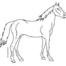 Coloriage : Cheval de profil