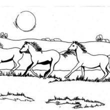 Coloriage : Chevaux sauvages galopants