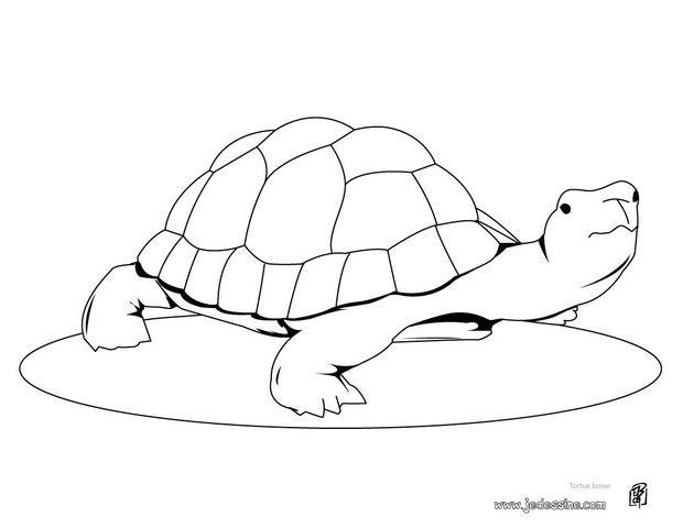 Coloriages coloriage d 39 une tortue bosse - Dessin d une tortue ...