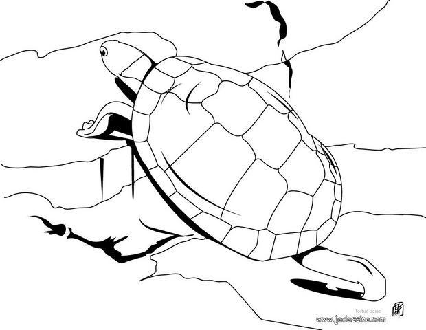 Coloriages coloriage d 39 une tortue bosse sur les rochers - Dessin d une tortue ...