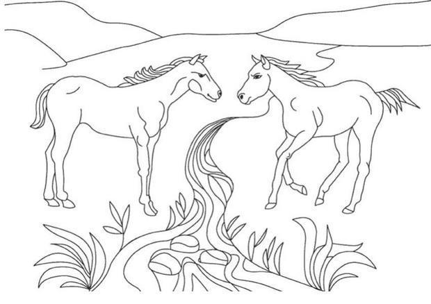 Coloriages deux chevaux sauvages - Coloriage cheveaux ...