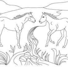 Coloriage : Deux chevaux sauvages