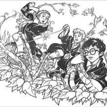 Coloriage Harry Potter : L'attaque des plantes