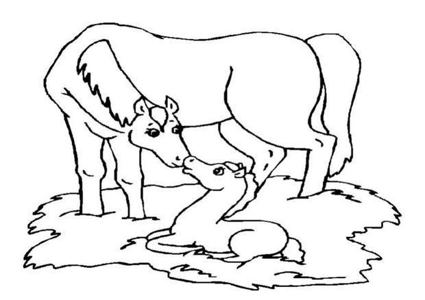 Coloriages jument et son poulain - Dessin a colorier cheval ...