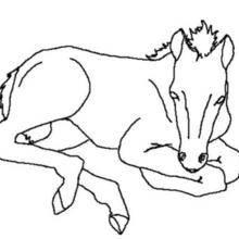 Coloriages cheval coloriages coloriage imprimer - Coloriage poulain ...