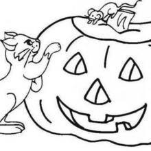 Coloriage d'Halloween : Coloriage de la citrouille et des chats