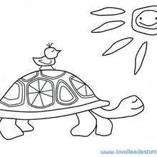 Coloriage d'un oiseau sur la tortue