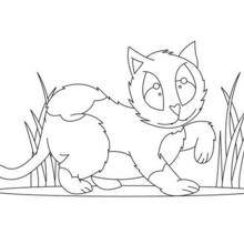 Coloriage : Chat sauvage