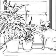 Coloriage : Chat sur une fenêtre