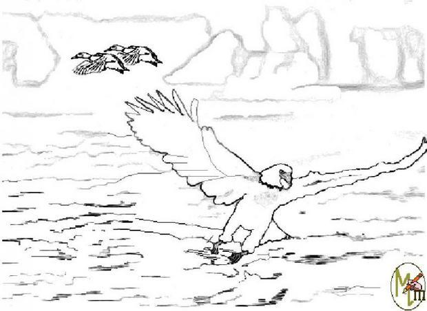 Coloriages un aigle - Dessin de aigle ...