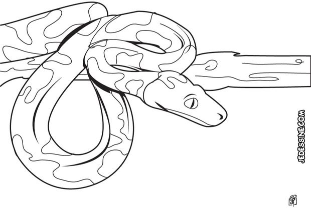Coloriages coloriage d 39 un boa albinos - Dessin de serpent cobra ...