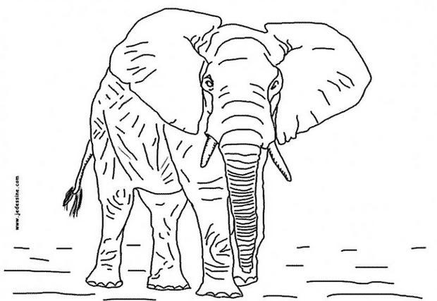 Coloriages coloriage d 39 un l phant - Dessin d un elephant ...