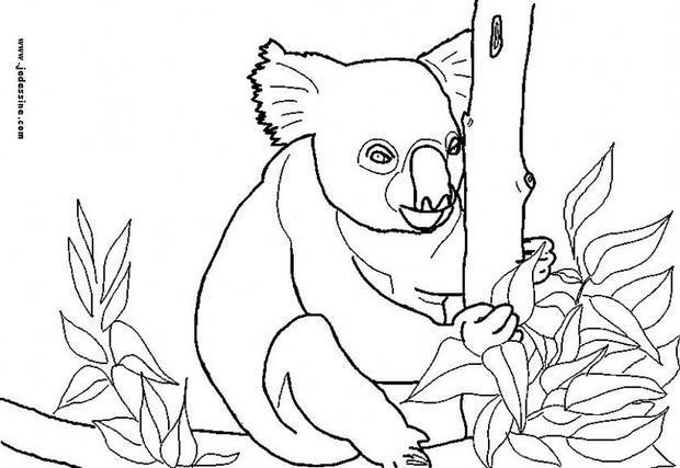 Coloriages Coloriage D Un Koala Fr Hellokids Com