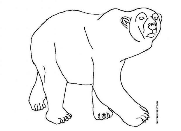 Coloriages coloriage d 39 un ours blanc - Dessin d un ours ...