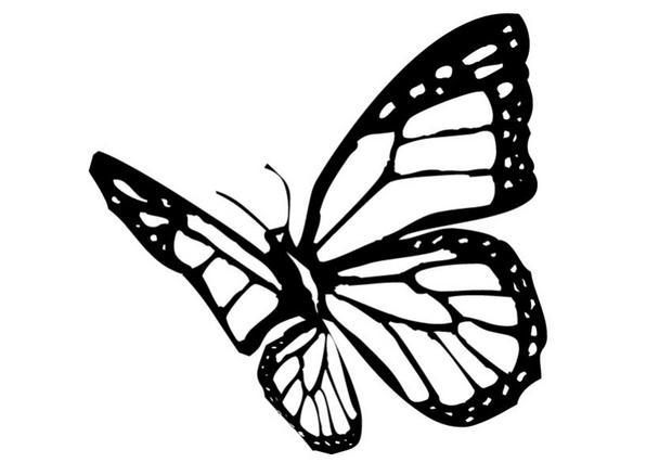 Coloriages coloriage d 39 un papillon n 5 - Coloriage en ligne papillon ...