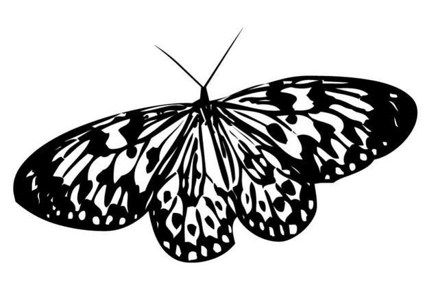 Coloriages coloriage d 39 un papillon n 7 - Coloriage en ligne papillon ...